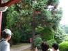 Koishikawa20085_8